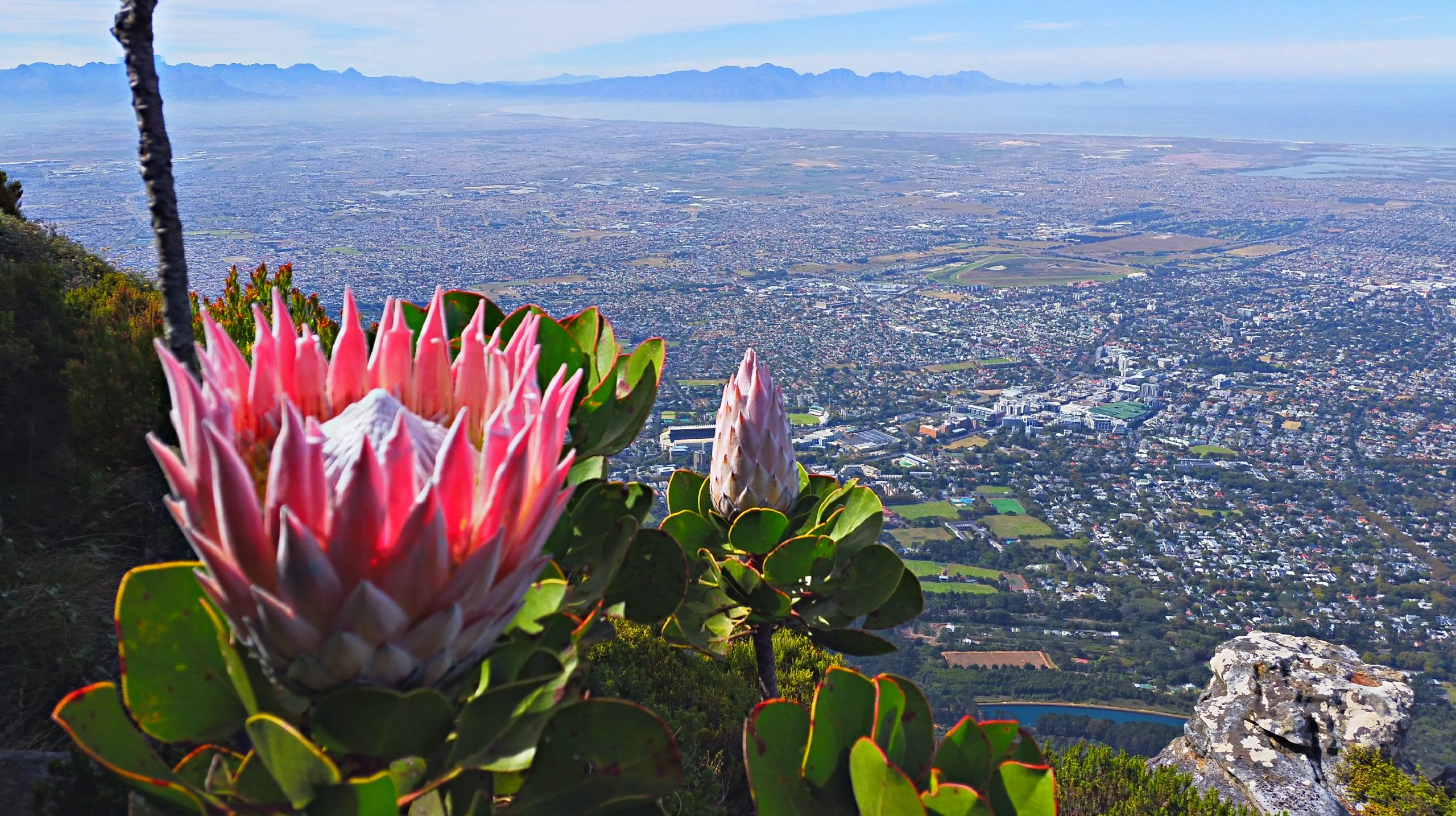 Devil's Peak - Table Mountain picture gallery